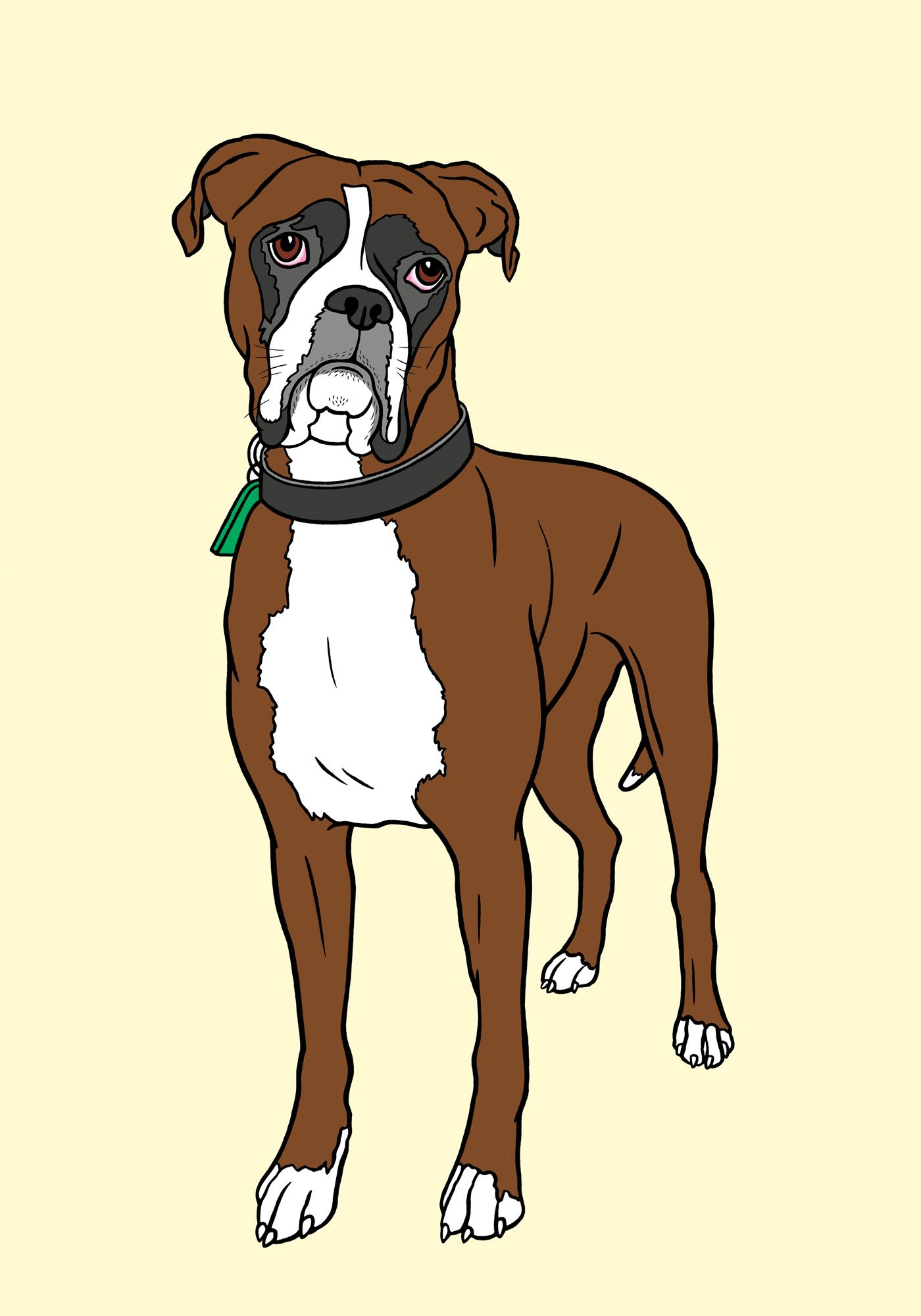 boxern-buffa